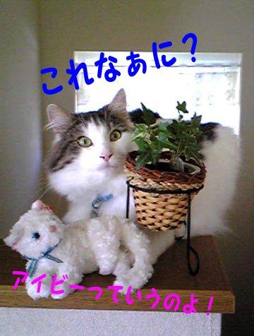 Image224a.jpg
