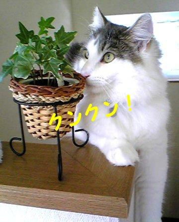 Image228c.jpg