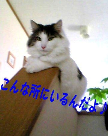 Image238d.jpg