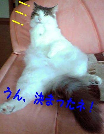 Image274e.jpg