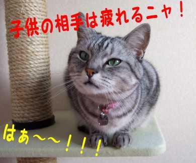 photo0034g.jpg