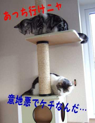 photo0098e.jpg