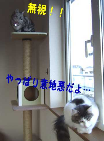 photo0100a.jpg