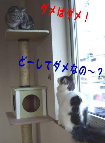 photo0102b.jpg