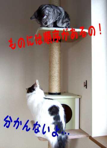 photo0103c.jpg
