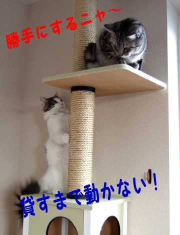 photo0105d.jpg