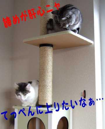 photo0106e.jpg