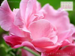 湘南風景壁紙カレンダー2008年6月その2