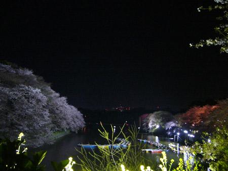 P1100575.jpg