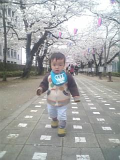 桜トンネルでお散歩♪