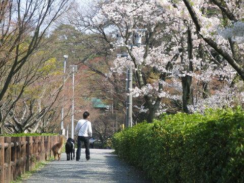 桜の下でお散歩♪
