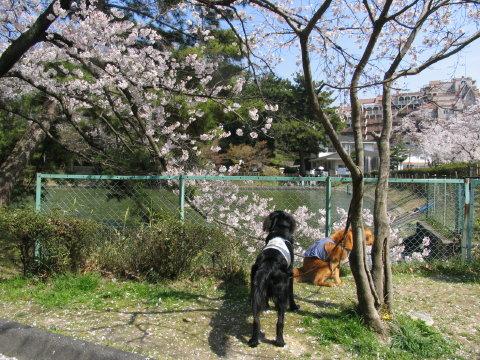 桜の下で・・・(^。^;)