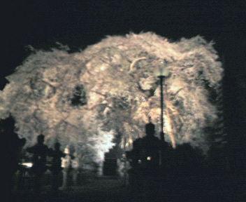 20060420122116.jpg