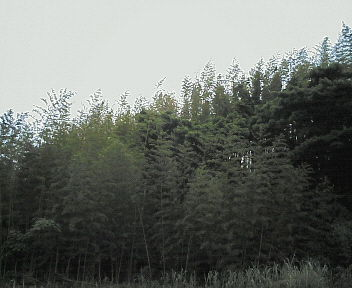 20060611190913.jpg