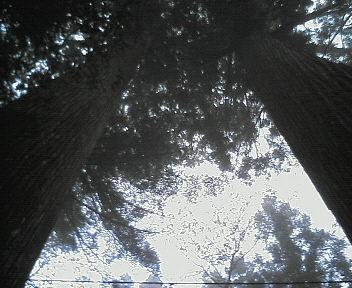 20061120123427.jpg