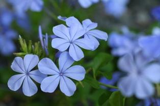 0730 花祭り