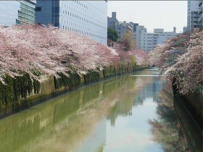 08-3-27 桜2
