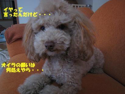 ライアNo1