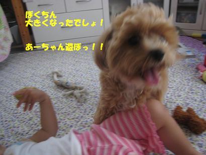 あーちゃん・ロンNo2