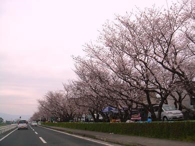 200804桜