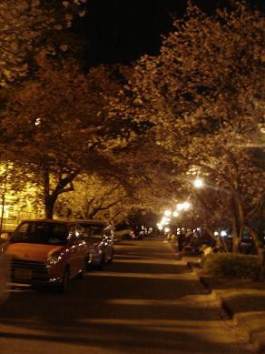 200804桜道
