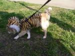 虎の子かも…。