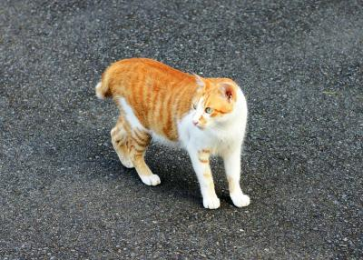 080706_cat1.jpg