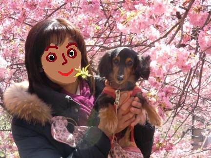 マリンとまつだの桜