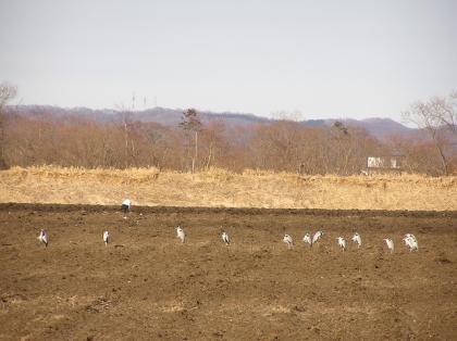 アオサギ畑(08・3)