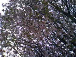 今年はホントに桜が早い・・・大丈夫かな?地球(--;)