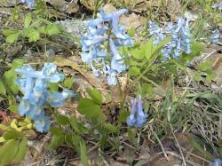 下を見るとかわいい花もいっぱい(*^_^*)