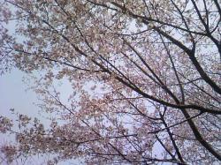 今年のお花見はこれで終了・・・(^_;)