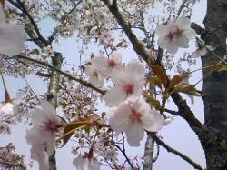 かわいい花ですね(^^)