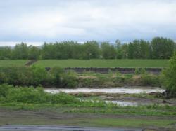 雨でいつもより増水している石狩川