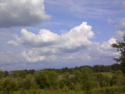 動物が走っている?ように見える雲(^^)