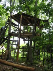 嵐山ビジターセンターの奥 制作中のツリーハウス