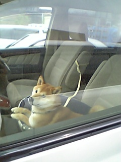 ドライブ留守番あん