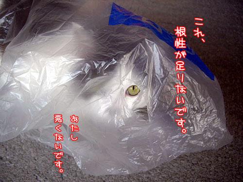 2008-4-6-11.jpg
