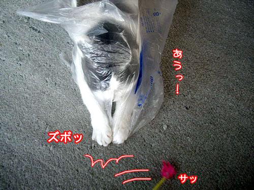 2008-4-6-8.jpg