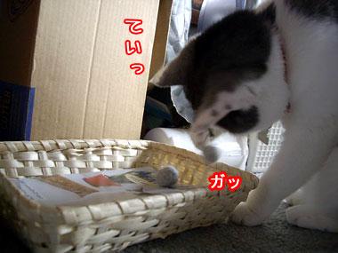 2008-5-19-5.jpg