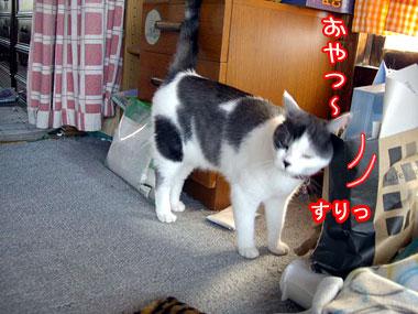 2008-7-18-2.jpg