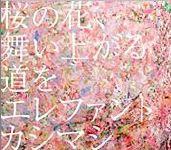 桜の花舞い上がる道を