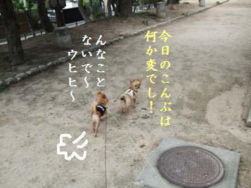 DSCF0456.jpg