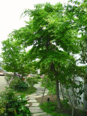 高島屋 ガーデン