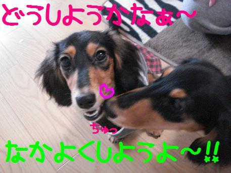 DSC02045.jpg
