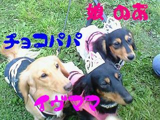 NEC_1084.jpg