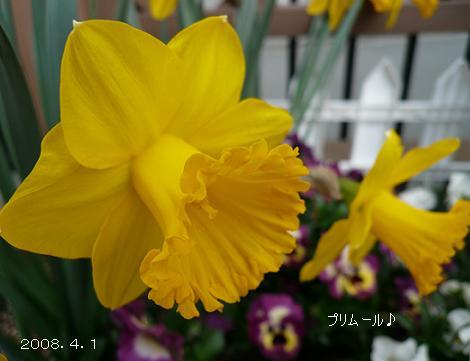 P1060138_p.jpg
