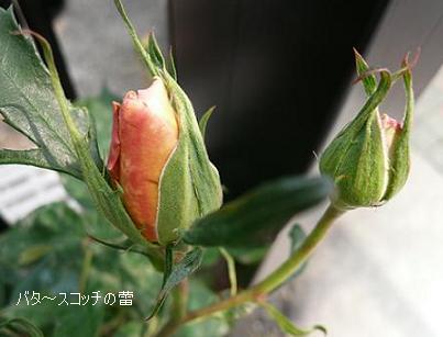 P1070087_b.jpg