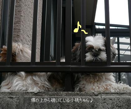 P1070171_komomo.jpg