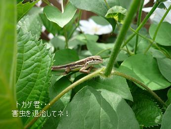 P1070380_azisai2.jpg